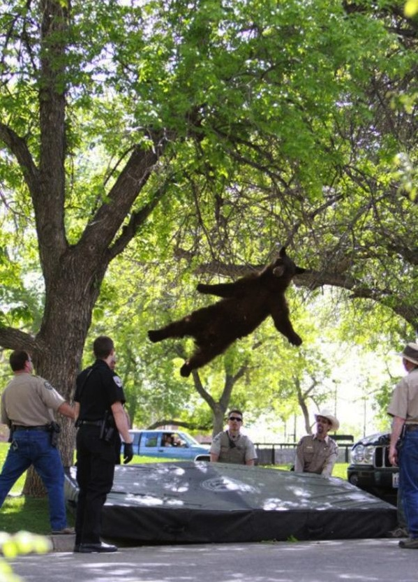 First We have Flying Moose and Now Flying Bear?